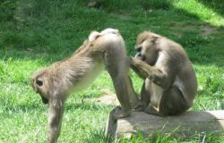 Singes_photo_comique-1-630x434